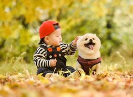 博美小可爱和小男孩拍摄的图片欣赏