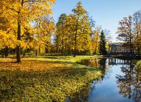 秋季树木风景图片