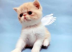 小小的加菲猫幼崽图片
