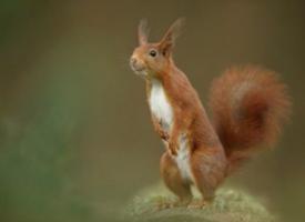 一組搞怪可愛的小松鼠圖片