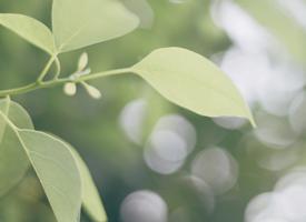 小清新绿色植物护眼桌面壁纸图片