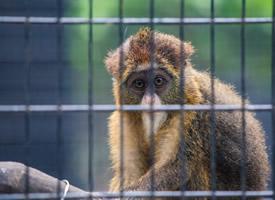 向往自由生活的猴子图片欣赏