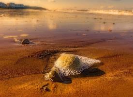 金黄的海滩图片