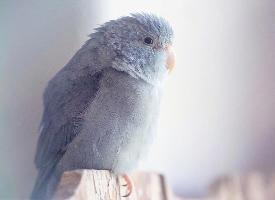一组可爱的小鹦鹉图片