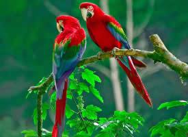 可爱动物鹦鹉高清摄影图片