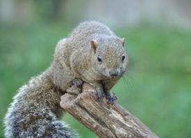 一組外形可愛的松鼠圖片欣賞