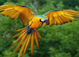 一组飞翔的鹦鹉图片