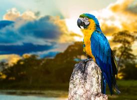 美丽可爱的五彩鹦鹉图片