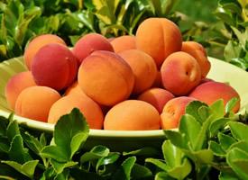 一组汁多味甜的杏子图片欣赏