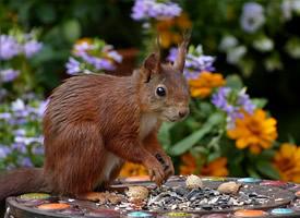 一組活潑調皮的小松鼠圖片欣賞