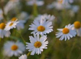 艳丽迷人的野外鲜花图片欣赏