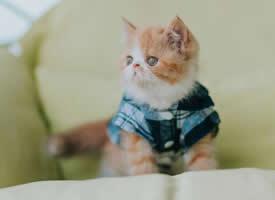 呆萌小貓可愛高清桌面壁紙