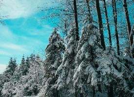 冬季白雪皑皑的森林图片