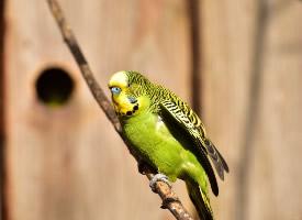 一组可爱小巧的鹦鹉图片