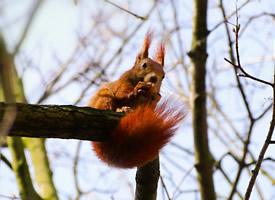 喜歡偷吃水果的小松鼠圖片欣賞