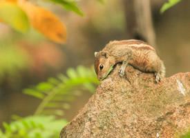 一組萌萌噠可愛的小松鼠圖片