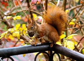 在樹干上玩耍的小松鼠圖片欣賞