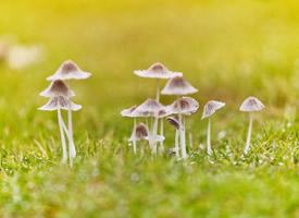 小清新护眼蘑菇桌面壁纸图片