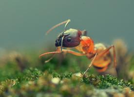 一组超微距蚂蚁图片大全