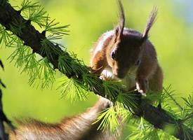 一組聰明機靈的小松鼠圖片欣賞