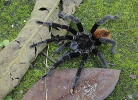 恐怖的大蜘蛛高清图片欣赏