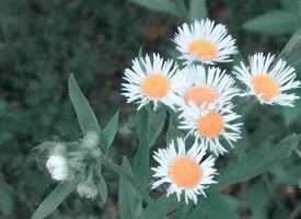 一组公路旁的小野花图片大全