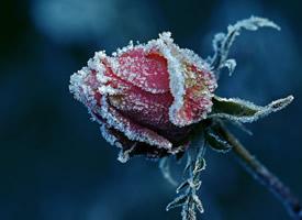 护眼冰冻植物高清桌面壁纸