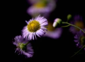 一组意境美的小野花图片欣赏
