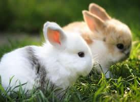 可愛呆萌的兔子高清桌面壁紙