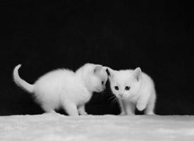 超可愛的小貓咪圖片桌面壁紙