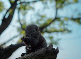 一組灰色可愛的小松鼠圖片欣賞