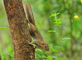 喜歡爬山的棕色小松鼠圖片