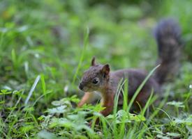 一組活潑可愛的小松鼠圖片
