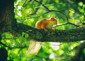 有著尖尖的小耳朵的小松鼠圖片