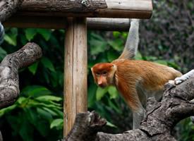 动物园里顽皮的猴子图片大全