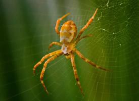 蜘蛛微距离拍摄高清图片欣赏