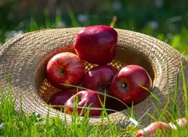 香甜烟台红苹果图片大全