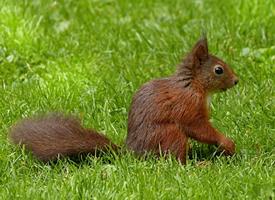 一組活潑愛動的小松鼠圖片欣賞