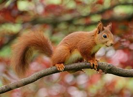 一組靈巧可愛的小松鼠圖片欣賞