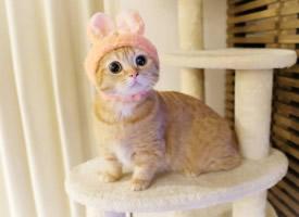 一组超萌可爱的小猫图片