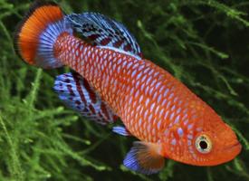 漂亮宝贝热带鱼图片