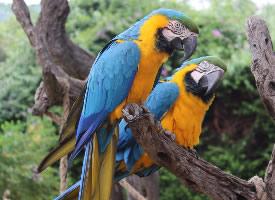 一组漂亮的鹦鹉高清图片欣赏