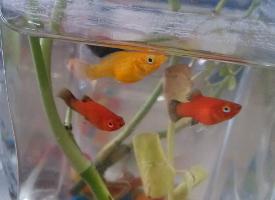 色彩斑斓的玛丽鱼图片