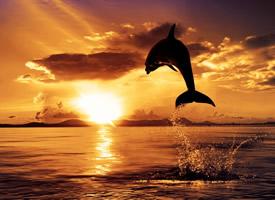 一组乖巧可爱的海豚图片欣赏