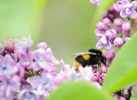 一组勤劳的小蜜蜂图片欣赏
