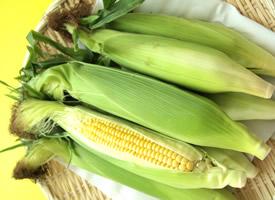 一组新鲜的玉米的图片欣赏