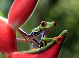 各种颜色的青蛙桌面壁纸