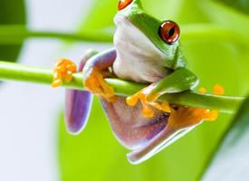 可爱的小青蛙桌面壁纸