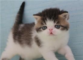 惹人喜爱的加菲猫图片