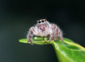蜘蛛微距离拍摄高清图片